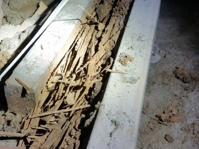 Termites Found in Roof During Inspection