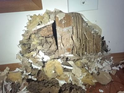 Termite destruction in lounge room wall | Senior Pest Management
