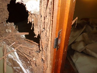 Termite damage found in wall door frame | Senior Pest Management