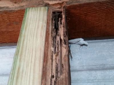 Termite damaged timber | Senior Pest Management