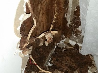 Termite destruction found in bedroom wall | Senior Pest Management
